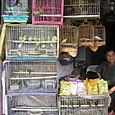 41 Bird Market