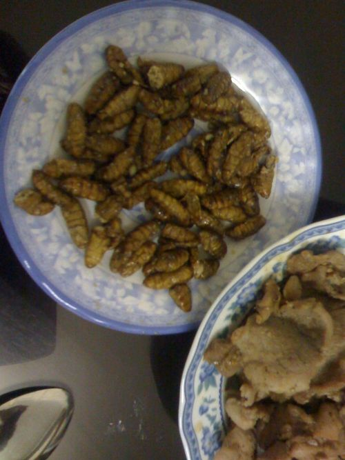 Silk worms for lunch