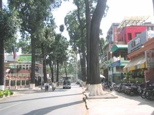 Treelined_street